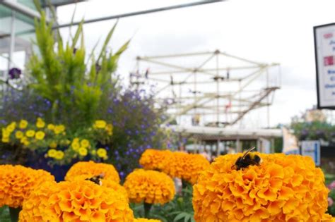 Planters Garden Centre by 17 Independent Garden Centres In Birmingham And Beyond Birmingham Mail