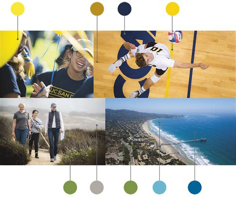 ucsd colors ucsd colors swim ucsd swimming diving volunteer assistant