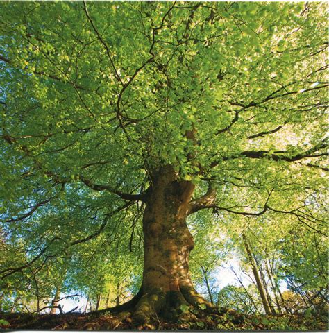 a picture of tree the trees mythgard forums
