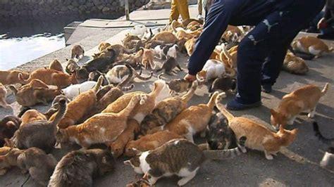 felines rule on ehime s cat island the japan times the 11 cat islands of japan photos soranews24