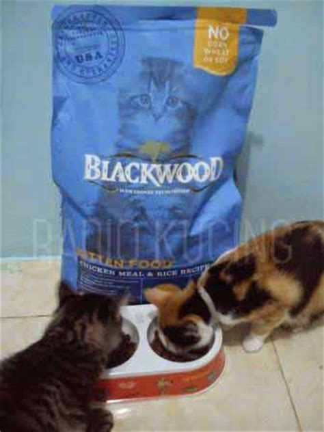 Makanan Kucing Blackwood Kitten 6kg review makanan kucing blackwood kitten chiken meal rice
