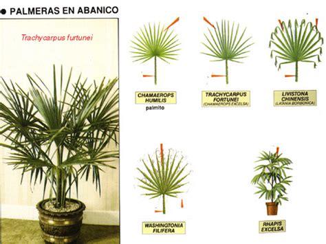 Plantas Online palmas