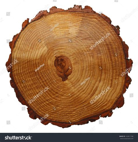 cross section of tree wood grain tree cross section isolated on white background
