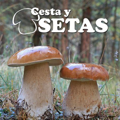 libro setas de espaa y cesta y setas cestaysetas twitter