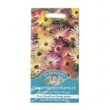Benih Bunga Nigella Midnight Mrfothergills F1 benih chrysanthemum tricolor single mixed 300 biji johnsons seeds bibitbunga
