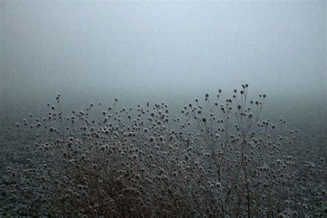 pflanzen november bild pflanzen november kalt fr 252 h winfried ritter