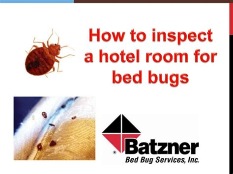 how to check for bed bugs at hotel inspecting a hotel room for bed bugs