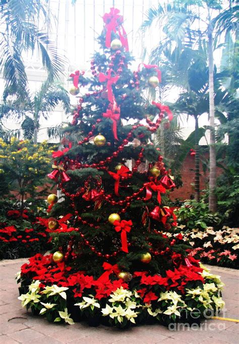 krismas tree to botni name botanical gardens tree in the mist with painting effect photograph by santuci