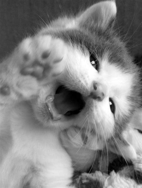 imagenes tumblr gatitos gatos gifs tumblr buscar con google gatos cats