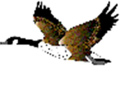 imagenes gif animales im 225 genes animadas de aves varias gifs de animales gt aves