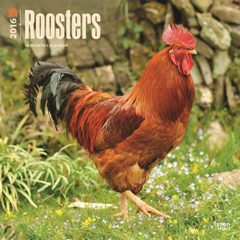 Cat Calendar 2018 Marks And Spencer Roosters Calendars 2018 On Abposters