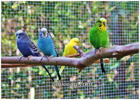 Kawat Ram Satu Gulung membuat kandang aviary cantik untuk burung kesayangan anda klub burung