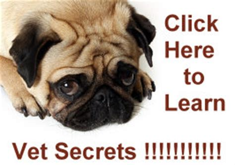 pug facts for pug facts