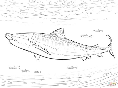 realistic tiger shark coloring page free printable
