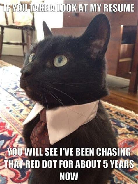 Black Cat Meme - business cat black cat memes pinterest