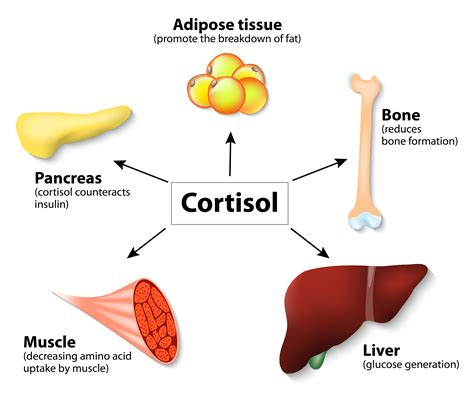 healthy fats and hormone production ashwagandha to lower cortisol levels for stress weight loss