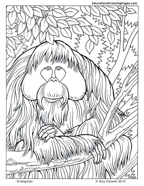Orangutan Coloring Pages Coloring Home