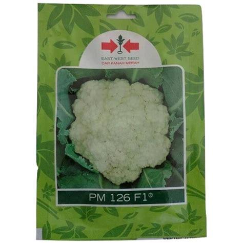 Benih Biji Bunga Dandelion Cocok Untuk Ditanam 1 jual benih bunga kol pm 126 f1 250 biji murah bibitbunga