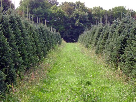 collections of christmas tree farms boone nc cheap