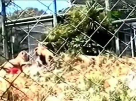 imagenes impresionantes de ataques de animales cuando los animales atacan youtube