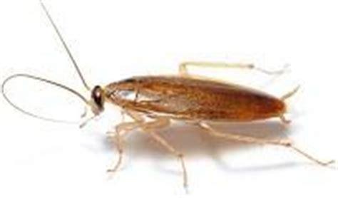 fliegenlarven in der wohnung was ist das f 252 r ein k 228 fer insekt etc mit foto natur