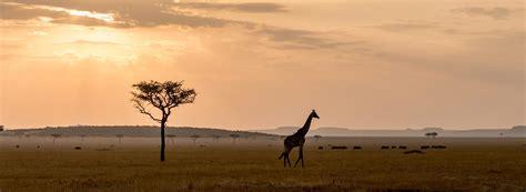 Safitri Syari home safari pros