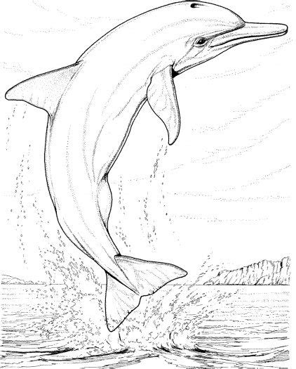 coloring pages for adults dolphins realistic dolphin coloring pages for adults enjoy