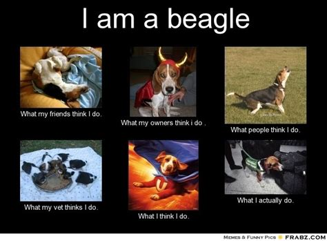 Beagle Meme - beagle meme new generators memes trends dogs