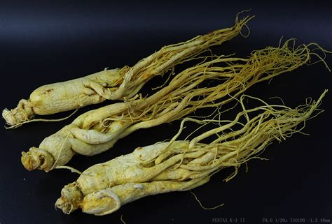 Ginseng China 1 lb bulk white ginseng root whole korean china herbal ebay