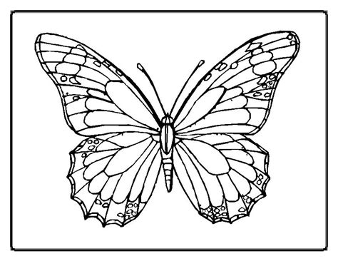 butterfly coloring pages  sun flower pages