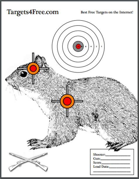 printable shooting targets squirrel printable squirrel targets related keywords printable