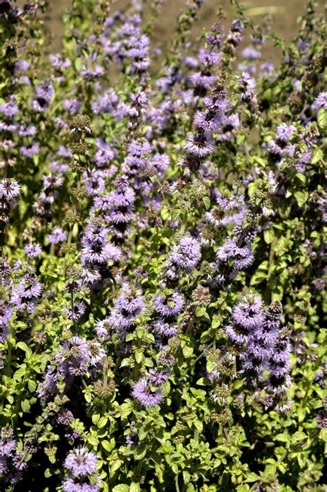 Supérieur Jardin Aromatique #9: 3ezlww0o8lk4g0sc04ksosgoo-source-9486709.jpg