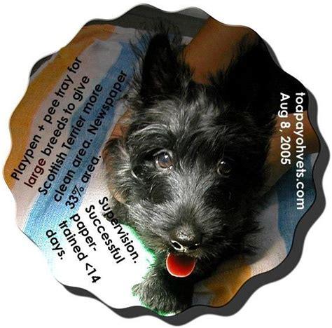 how many do puppies need 1008asingapore toa payoh veterinary surgery animal doctor cat rabbit