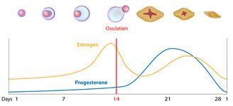 pain   period    pregnancy symptom