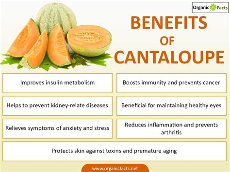 can my cantaloupe 7 important benefits of cantaloupe organic facts