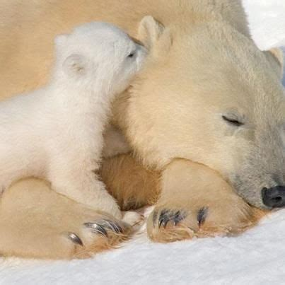 baby polar bear ill  real good care