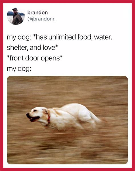 definitive list     dog memes   world