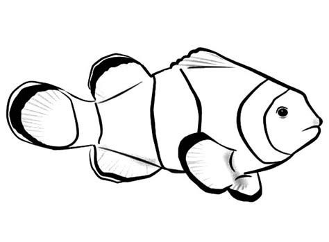 clown fish coloring sheet coloring pages