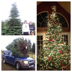 christmas trees bellingham wa 1000 images about country on country primitive and
