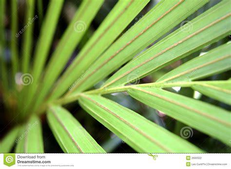 leaf pattern photography leaf pattern stock photography image 2693322