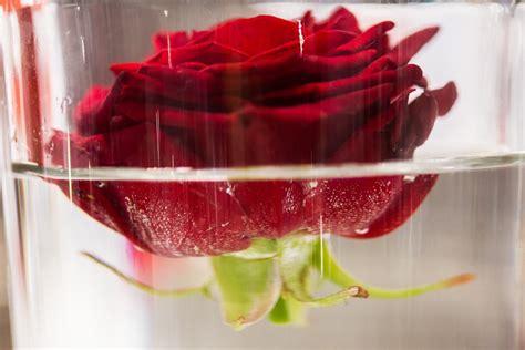 Decoration Florale Evenementiel d 233 coration florale evenementielle marseille 13 aix en
