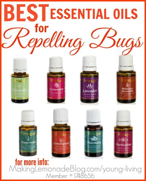 what spray is good for bed bugs homemade outdoor cing spray bugs hate it making lemonade
