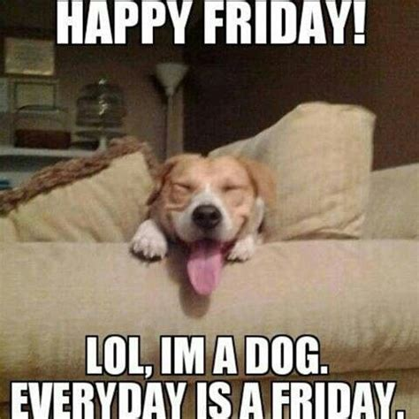 Friday Dog Meme - happy friday funny pinterest