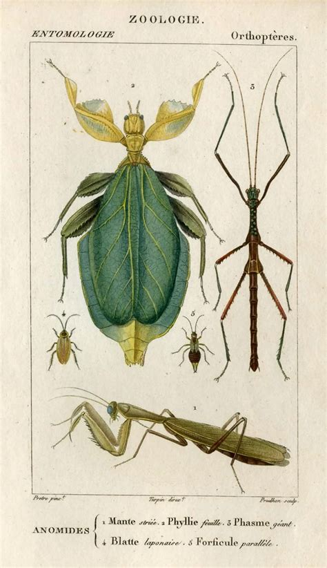 printable insect poster 1816 insects original antique framed print engraving
