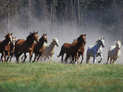 Horses running wallpapers and images wallpapers pictures photos