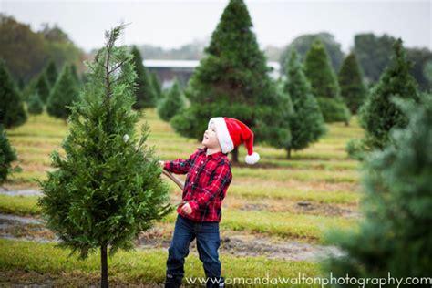 christmas tree farm tomball 28 best tree farm houston tx tree farm houston tomball the woodlands 10