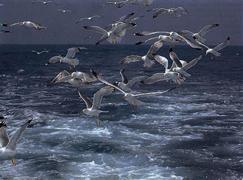 gabbiano mare gabbiani 171 ponza racconta