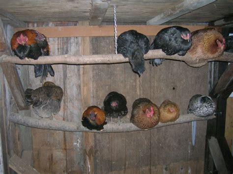 roosting bar backyard chickens