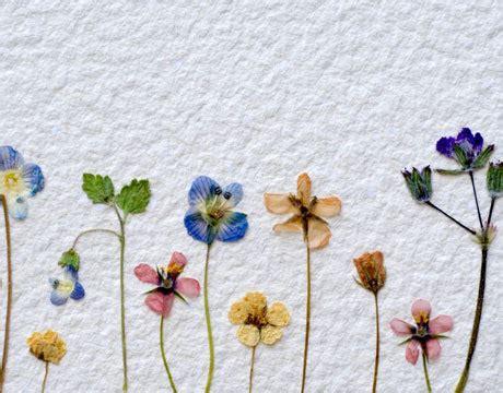 flower pressing on tumblr