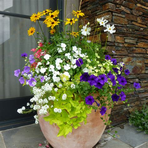potted flower arrangement ideas google search outside